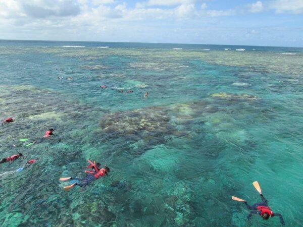 Great Barrier Reef off of Cairns, Austrlaia
