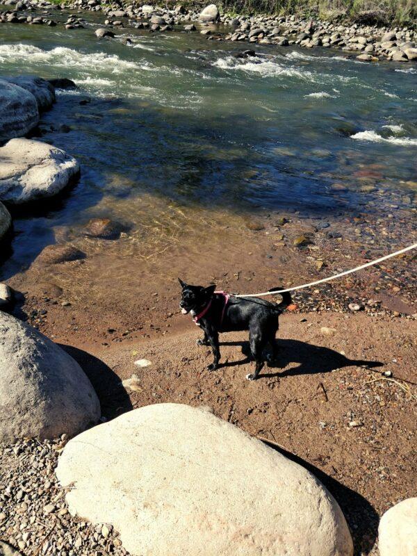 Small black dog near stream