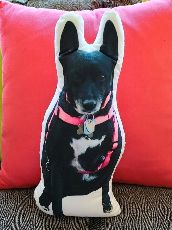All About Vibe Customized Dog Pillow