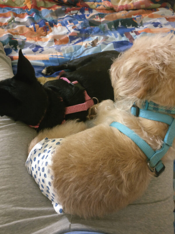 Dogs snuggling.