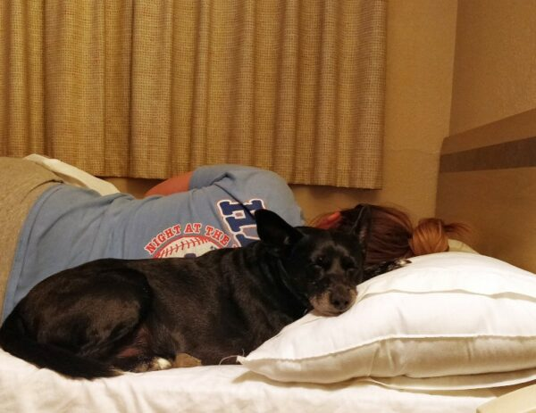 Dog snuggling with human